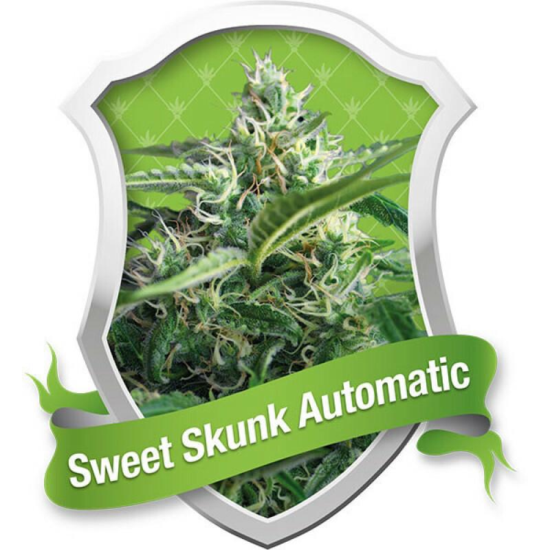 R.Q.S. Sweet Skunk (Auto) (3 Pcs)