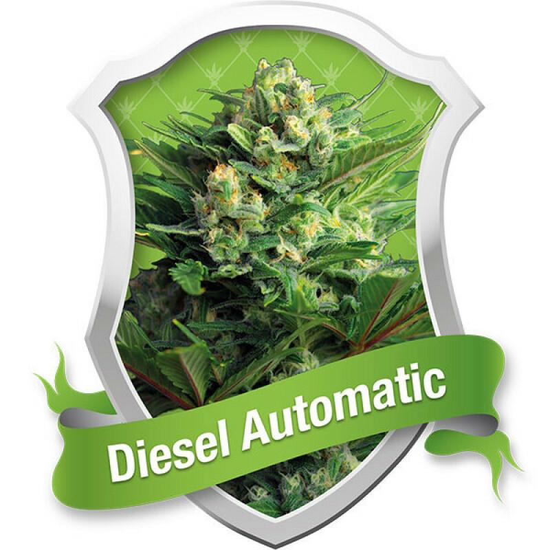 R.Q.S. Diesel (Auto) (1 Pc)
