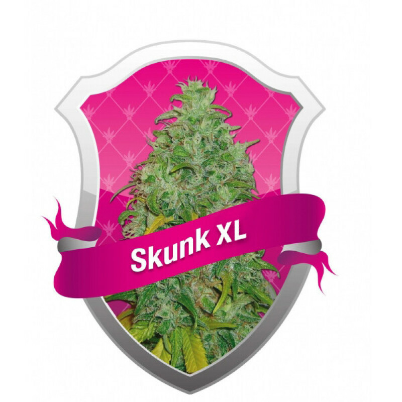 R.Q.S. Skunk Xl (5 Pcs)