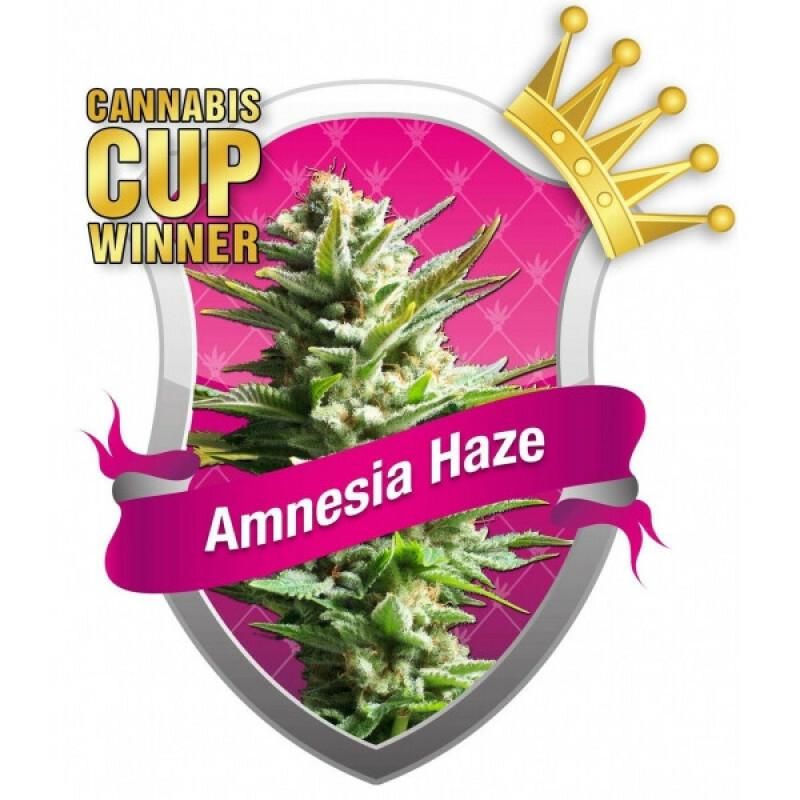 R.Q.S. Amnesia Haze 10 Pcs
