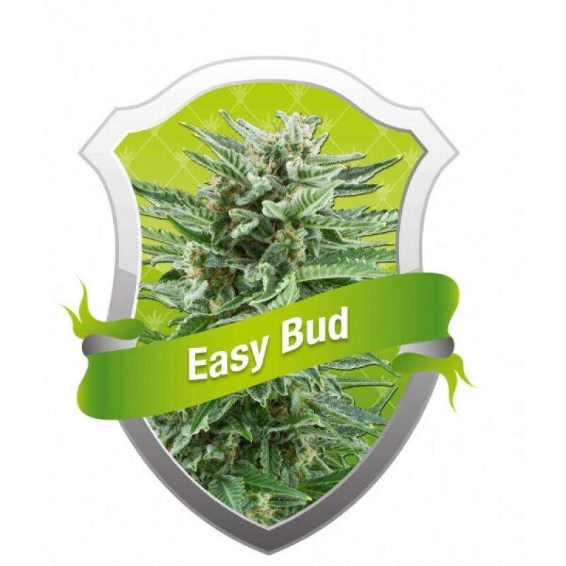 R.Q.S. Easy Bud ( 10 Pcs. )