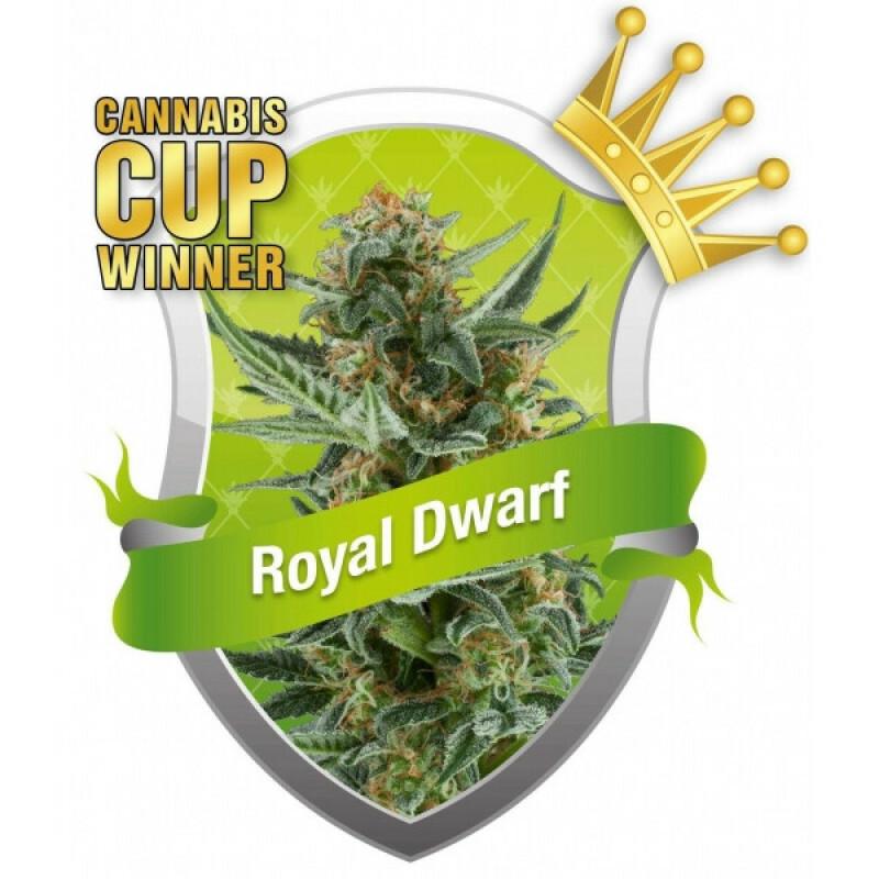 R.Q.S. Royal Dwarf ( 3 Pcs. )