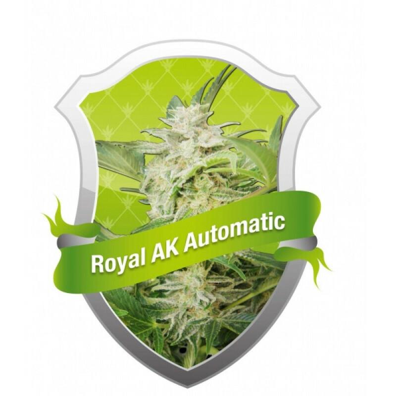 R.Q.S. Royal Ak Automatic ( 5 Pcs)