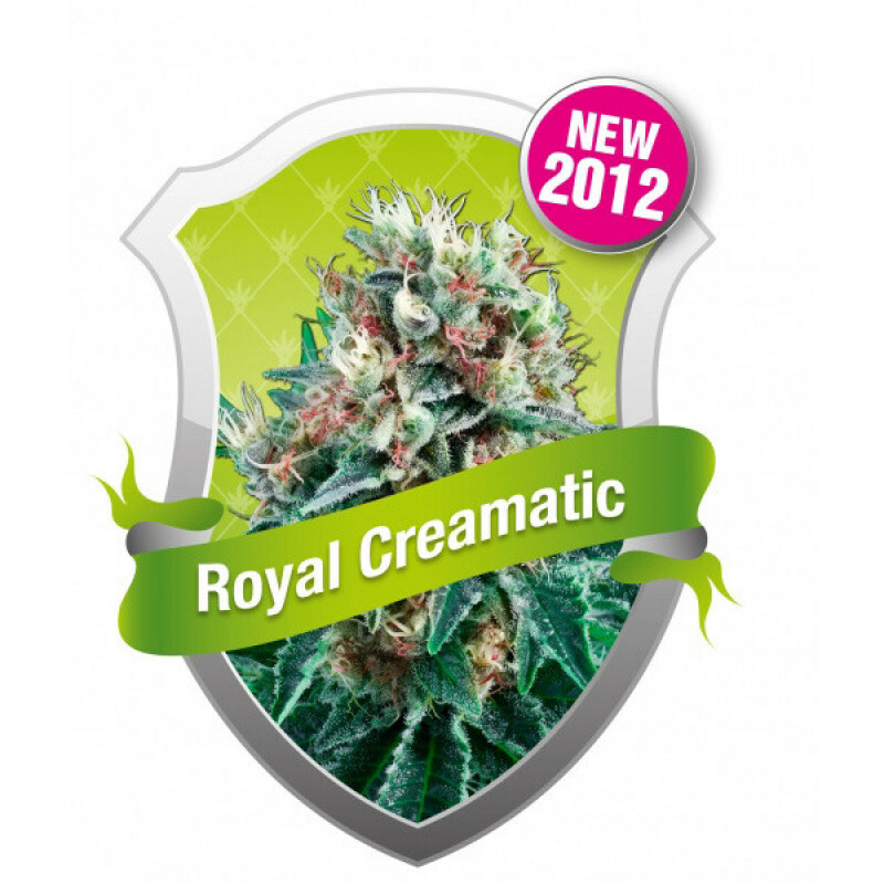 R.Q.S. Royal Creamatic (Auto)(3 Pcs)