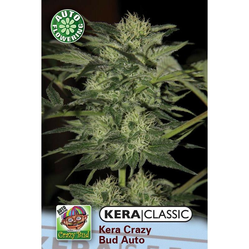 Kera Seeds Crazy Bud 3 Pcs (Auto)