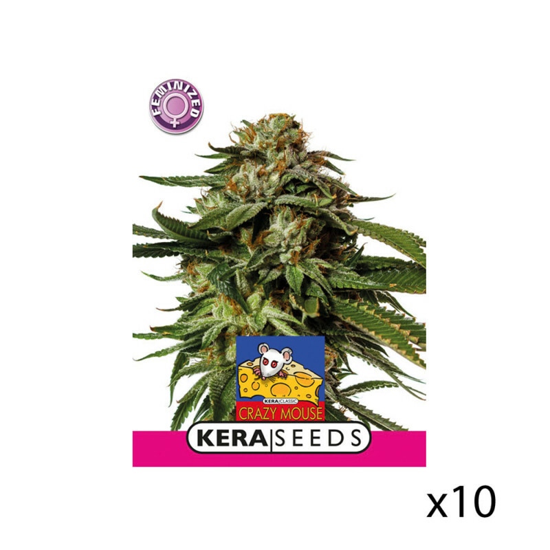 Kera Seeds Amsterdam Cheese 10 Pcs (Fem)