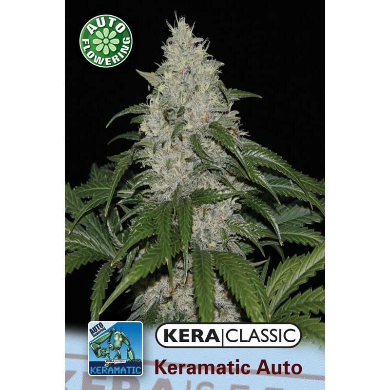 Kera Seeds Keramatic Auto 1 Pc (Auto)