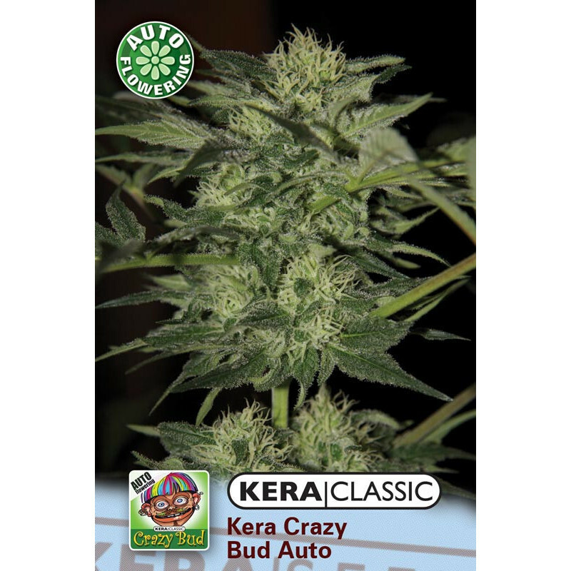 Kera Seeds Crazy Bud 1 Pc (Auto)