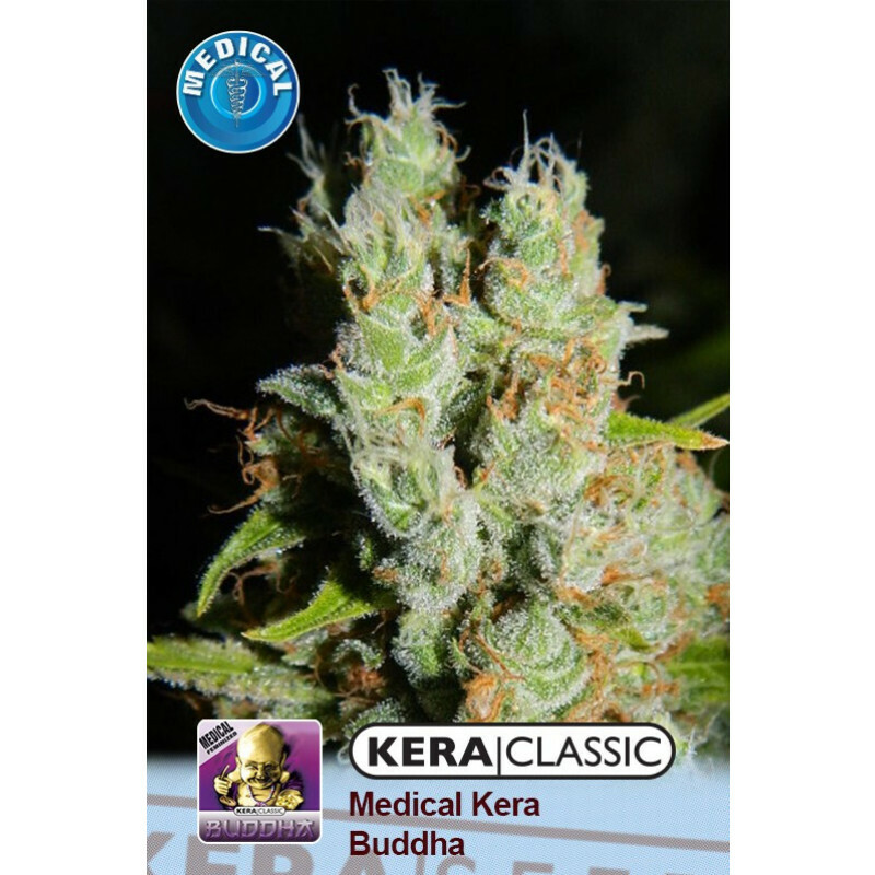 Kera Seeds Medical Buddha 5 Pcs (Fem)