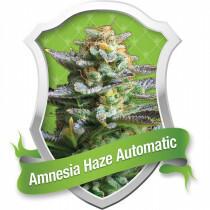 R.Q.S. Amnesia Haze (Auto) (10 Pcs)