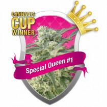 R.Q.S. Special Queen No. 1 ( 3 Pcs. )
