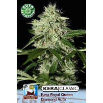 Kera Seeds Royal Q Diamond 10 Pcs (Auto)