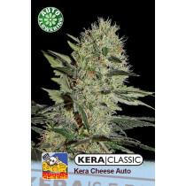 Kera Seeds Cheese 10 Pcs (Auto)