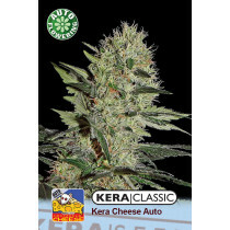 Kera Seeds Cheese 10 Pcs (Auto)