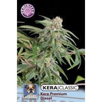 Kera Seeds Premium Diesel 1 Pc (Fem)