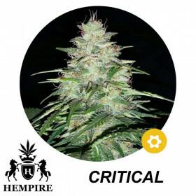 Hempire Seeds Critical 5 Pcs (Auto)