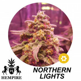 Hempire Seeds Northern Lights 5 Pcs (Auto)