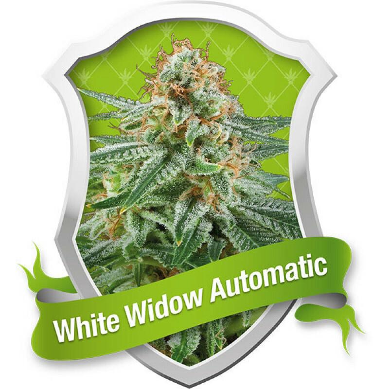 R.Q.S. White Widow (Auto) (5 Pcs)
