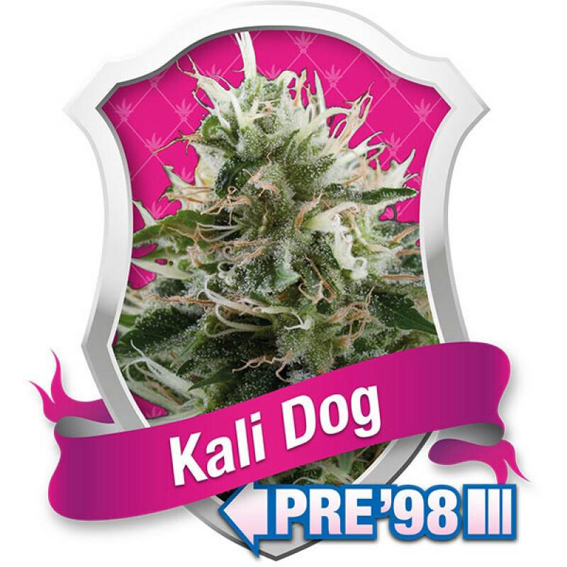 R.Q.S. Kali Dog (3 Pcs)