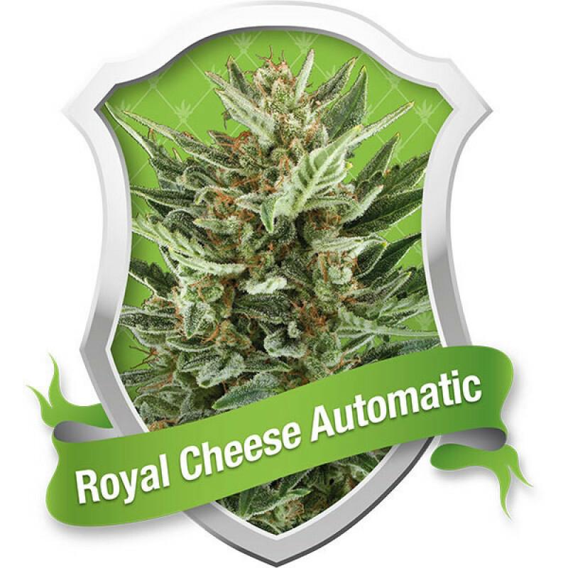R.Q.S. Royal Cheese (Auto) (1 Pc)