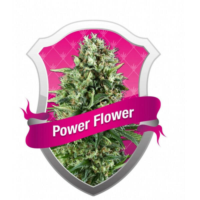 R.Q.S. Power Flower (10 Pcs.)
