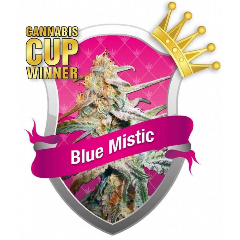 R.Q.S. Blue Mistic (10 Pcs)