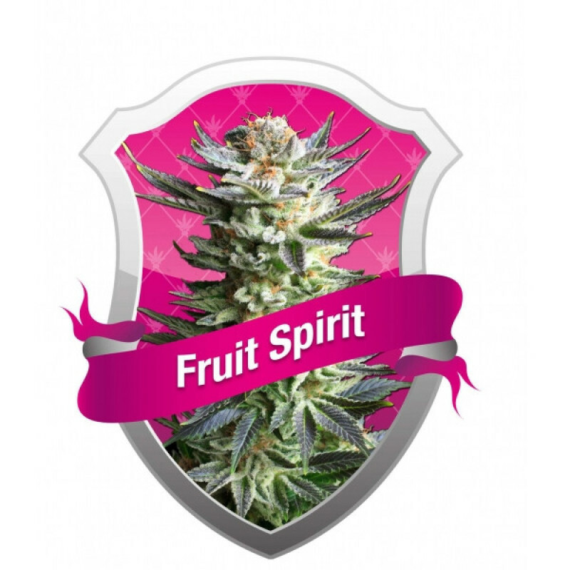 R.Q.S. Fruit Spirit (3 Pcs)