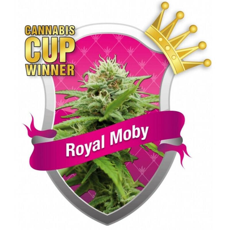 R.Q.S. Royal Moby ( 10 Pcs. )
