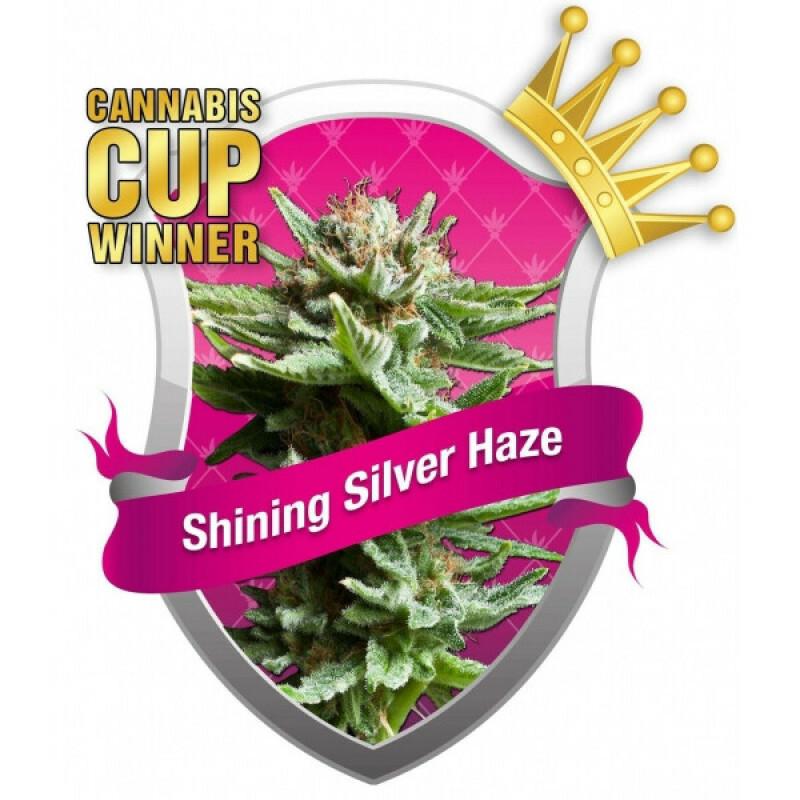 R.Q.S. Shining Silver Haze ( 1 Pcs. )
