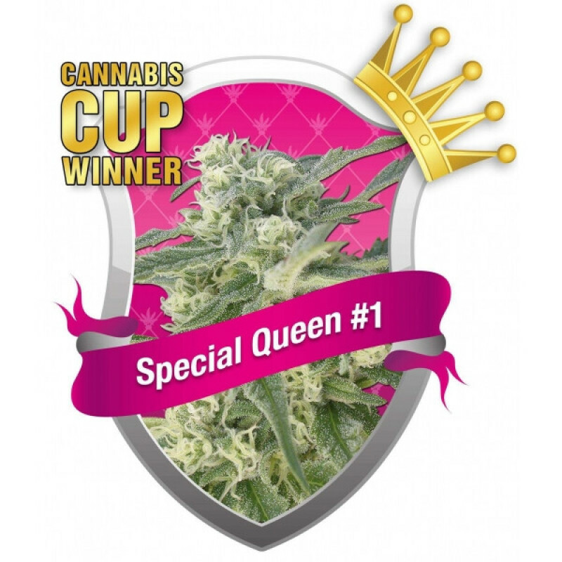 R.Q.S. Special Queen No. 1 ( 1 Pcs. )