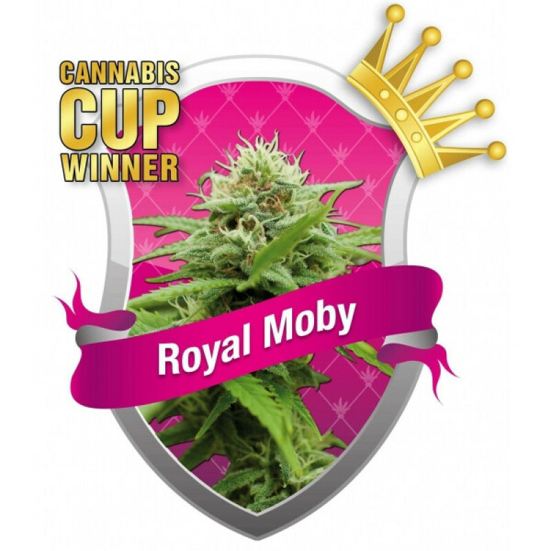 R.Q.S. Royal Moby ( 1 Pcs. )