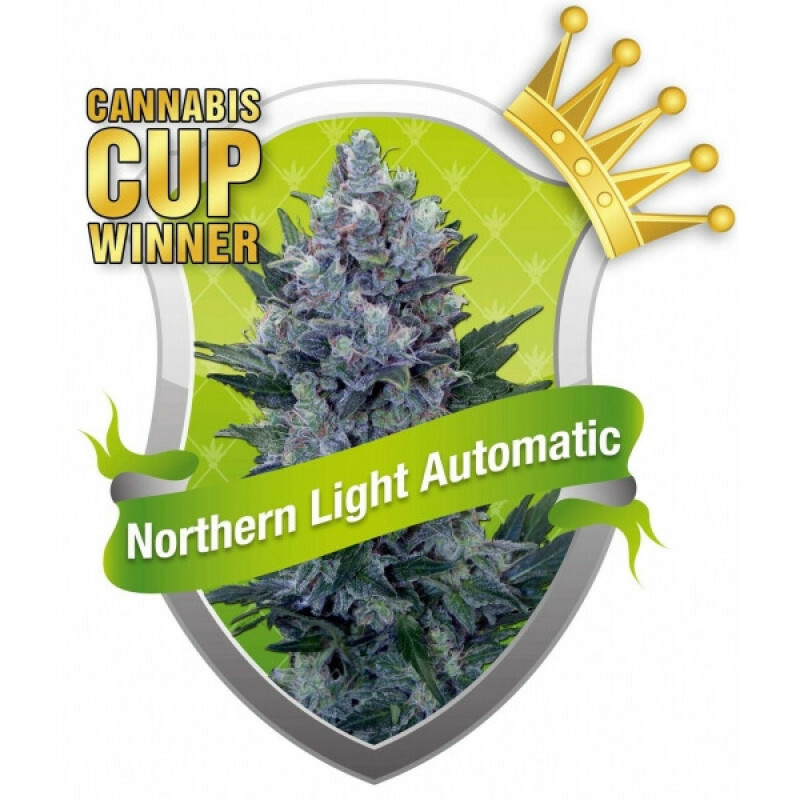 R.Q.S. Northern Light Automatic ( 5 Pcs)
