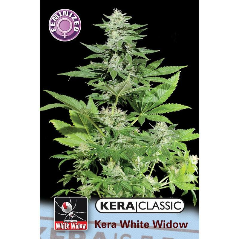 Kera Seeds White Widow 5 Pcs (Fem)