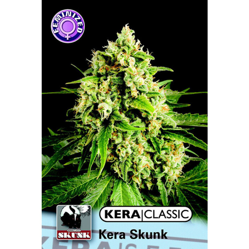 Kera Seeds Kera Skunk 10 Pcs (Fem)