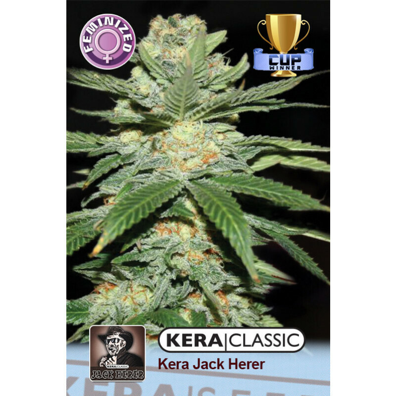 Kera Seeds Jack Herer 1 Pc (Fem)