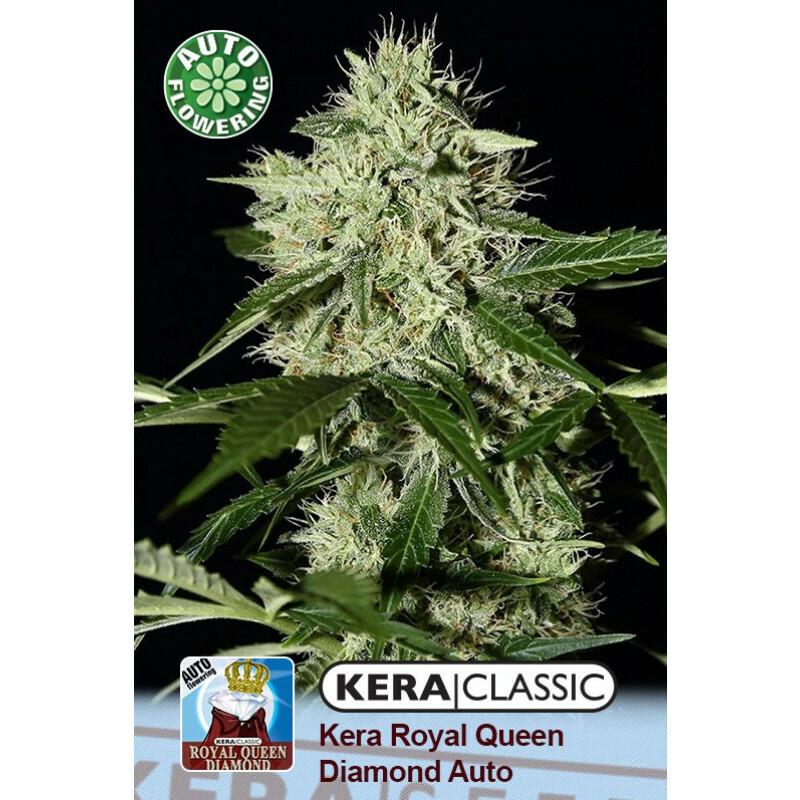 Kera Seeds Royal Q Diamond 10 Pcs (Auto)