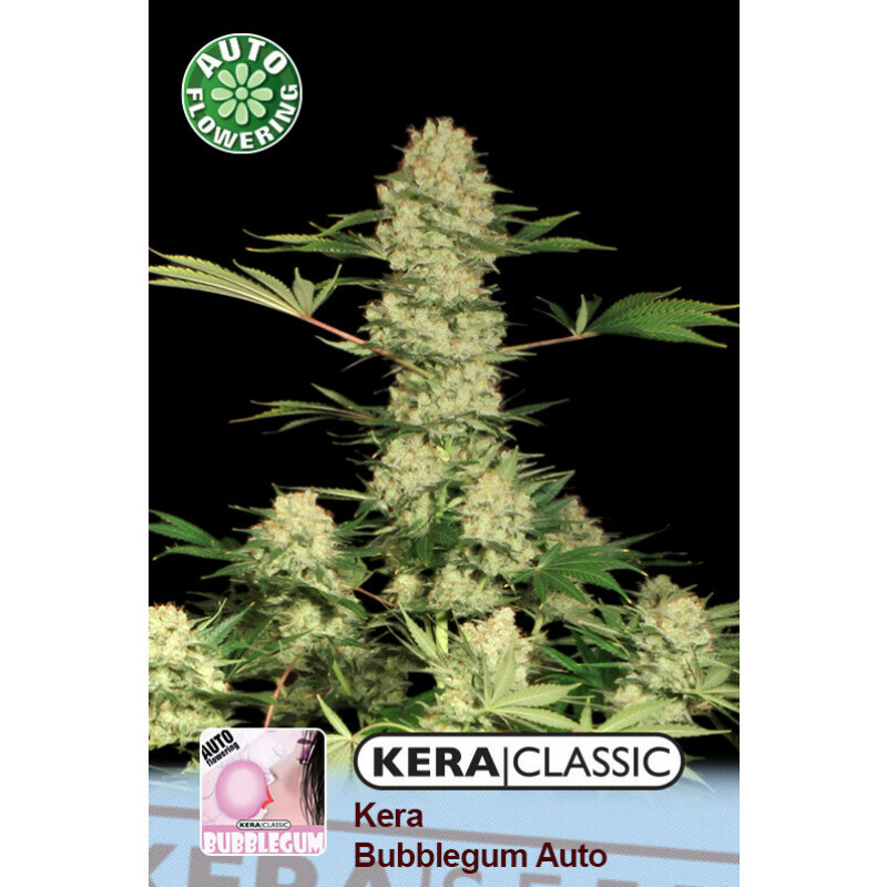 Kera Seeds Bubblegum 10 Pcs (Auto)