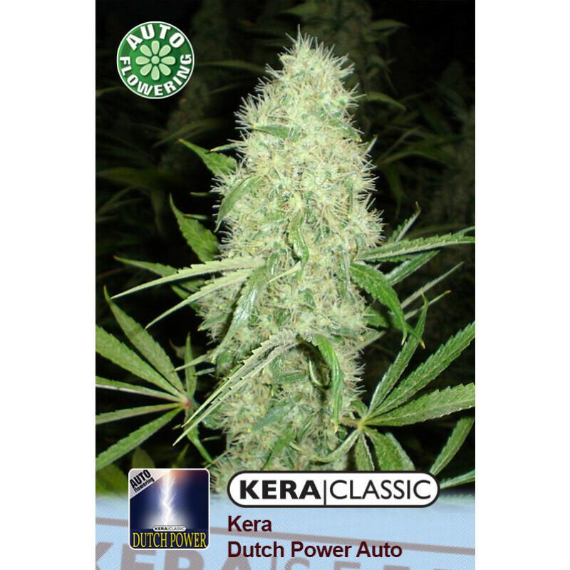 Kera Seeds Dutch Power 10 Pcs (Auto)