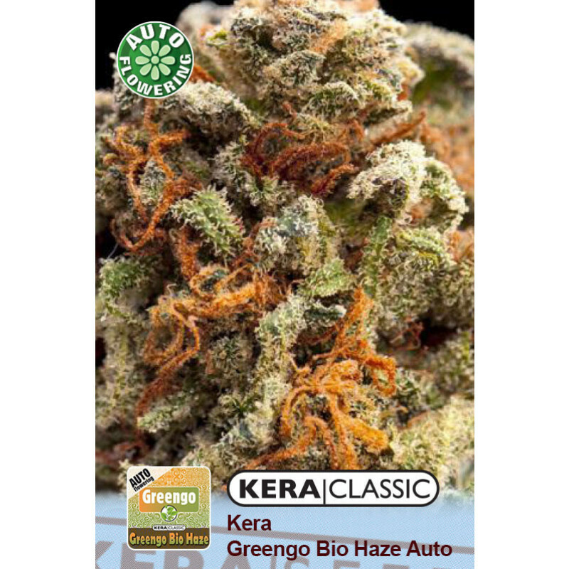 Kera Seeds Greengo Bio Haze 3 Pcs (Auto)