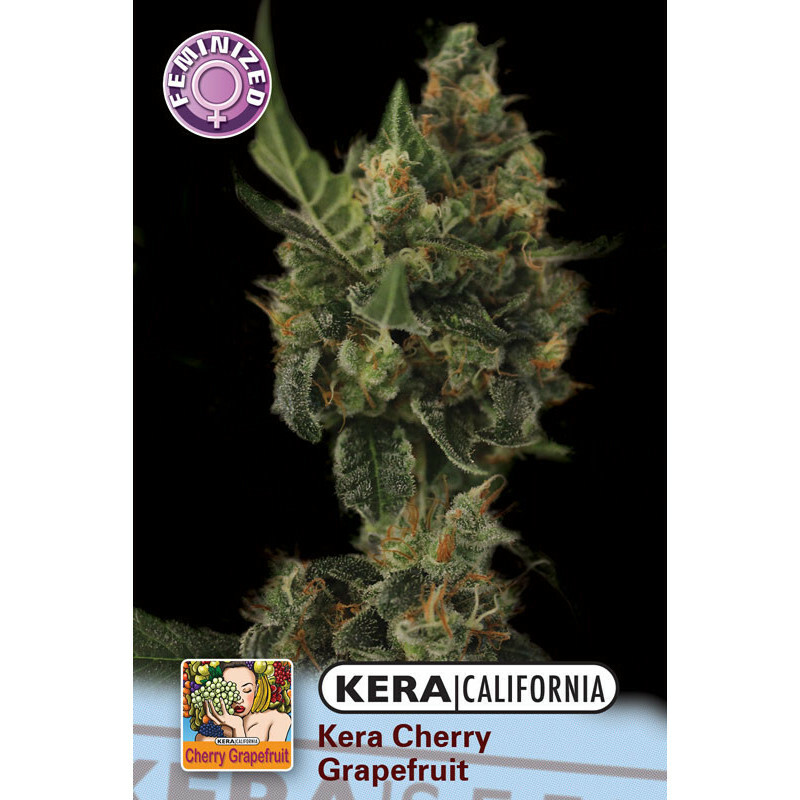 Kera California Cherry Grapefruit 3 Pcs (Fem)