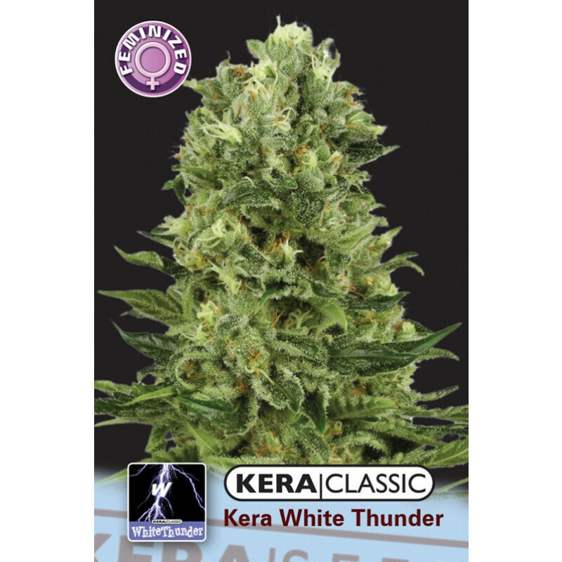 Kera Seeds White Thunder 10 Pcs (Fem)
