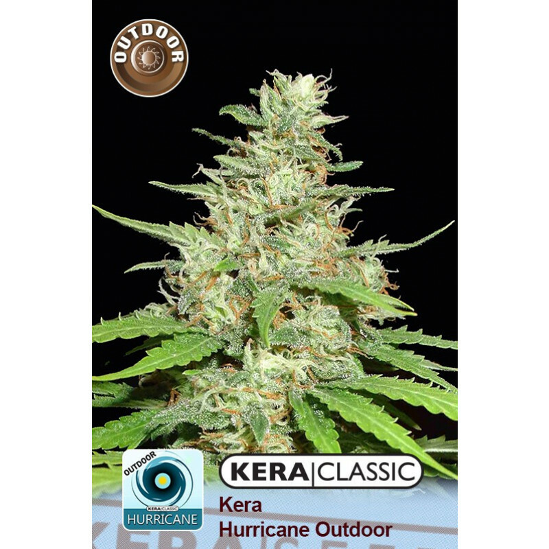 Kera Seeds Hurricane Outdoor 10 Pcs (Fem)