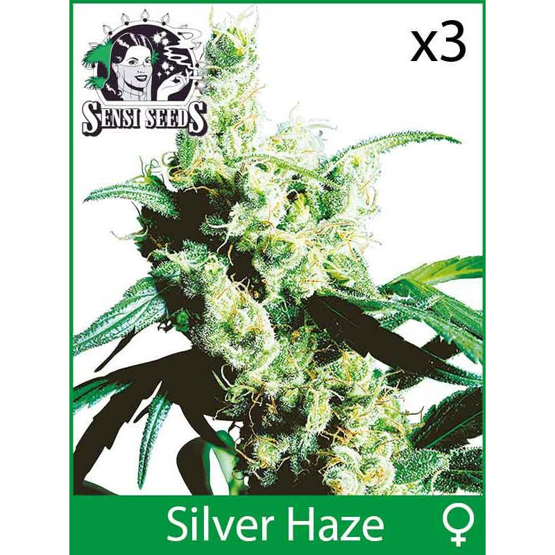 Sensi Seeds Silver Haze (Fem) (3 Pcs)