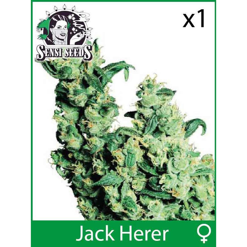 Sensi Seeds Jack Herer (Fem) (1 Pcs)