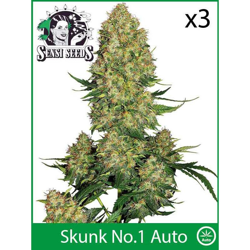 Sensi Seeds Skunk No 1 (Auto) (3 Pcs)