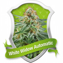 R.Q.S. White Widow (Auto) (3 Pcs)