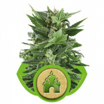 R.Q.S. Royal Kush  3 Pcs (Auto)
