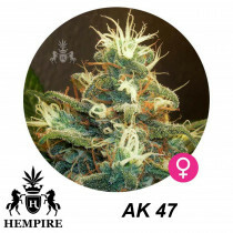 Hempire Seeds Ak-47 5 Pcs (Fem)