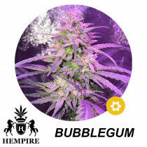 Hempire Seeds Bubblegum 5 Pcs (Auto)