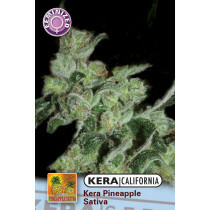 Kera California Pineapple Sativa 3 Pcs (Fem)